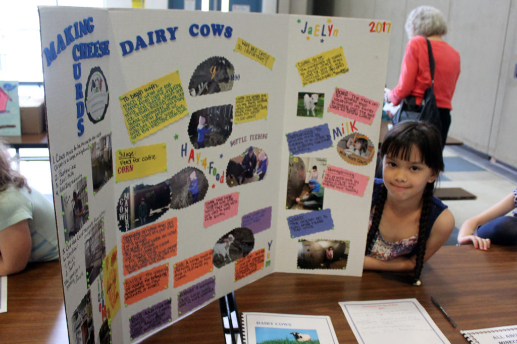 Student with displayon cheese and cows