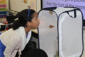 girls looking at butterflies in butterfly enclosure