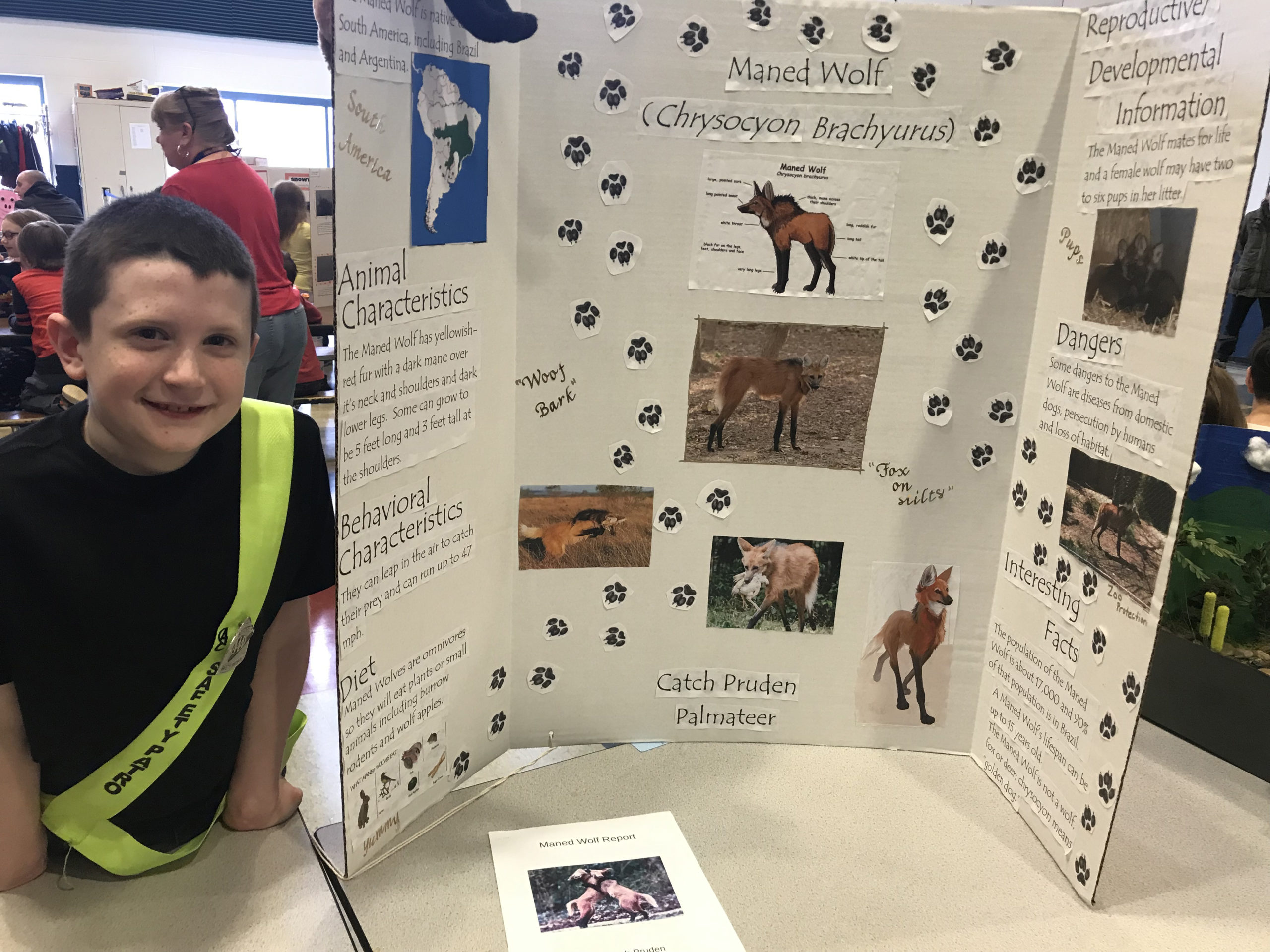 boy with tri-fold display on animals