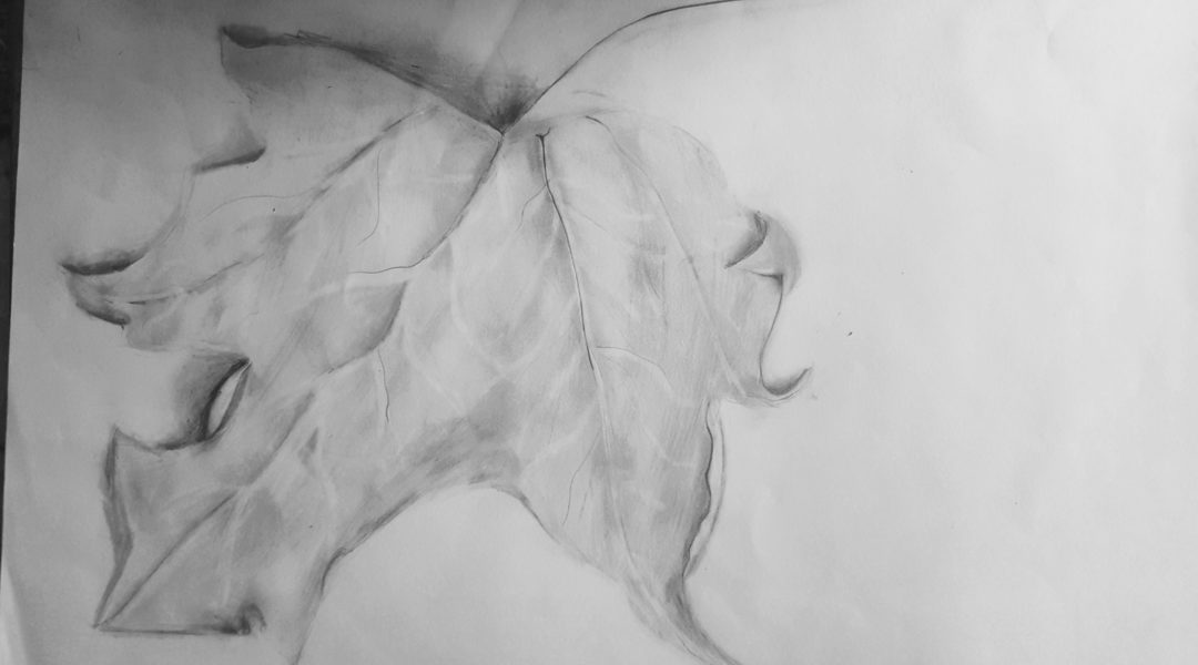 pencil drawing of leaf