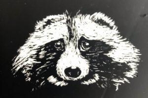 print of raccoon